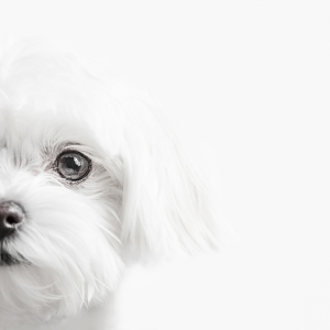Glamour Pet Photography Vancouver-2