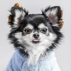 Glamour Pet Photography Vancouver-22