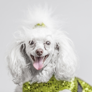 Glamour Pet Photography Vancouver-5