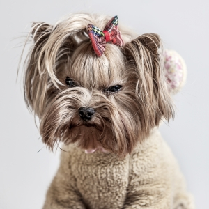 Glamour Pet Photography Vancouver-8