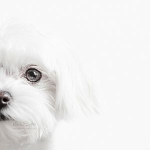Glamour-Pet-Photography-Vancouver-2