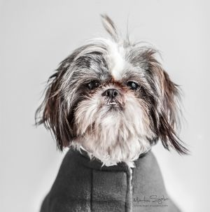 Glamour-Pet-Photography-Vancouver-4